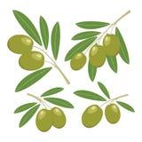olijven Reeks groene olijven met groene bladeren Stock Foto's