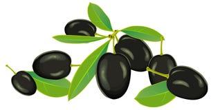 Olijven, vector Royalty-vrije Stock Afbeelding