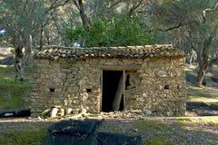 Olijvenbosjes in Arilas, Korfu, Griekenland royalty-vrije stock foto