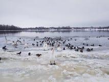 Olik art av fåglar Fotografering för Bildbyråer