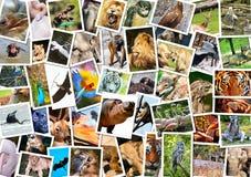Olik djurcollage royaltyfri fotografi