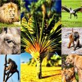 Olik djurcollage på vykort Arkivfoto