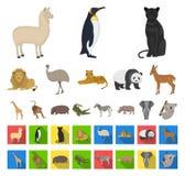 Olik djurtecknad film, plana symboler i den fastställda samlingen för design Det fågel-, rovdjur- och herbivorvektorsymbolet lage vektor illustrationer