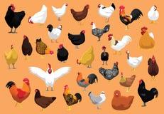 Olik höna föder upp illustrationen för hönstecknad filmvektorn royaltyfri illustrationer