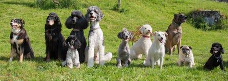 Olik hundkapplöpning som sitter i trädgården Arkivfoton