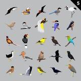 Olik illustration 5 för fågeltecknad filmvektor Royaltyfria Foton