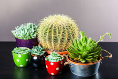 Olik kaktus fem royaltyfri bild