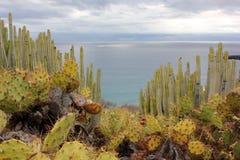 Olik kaktusart och havet royaltyfri bild