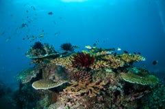 Olik korallrever och fjäderstjärna i Gili, Lombok, Nusa Tenggara Barat, Indonesien undervattens- foto Royaltyfria Bilder
