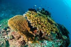 Olik korallrever och fjäderstjärna i Gili, Lombok, Nusa Tenggara Barat, Indonesien undervattens- foto royaltyfria foton