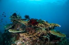 Olik korallrever och fjäderstjärna i Gili, Lombok, Nusa Tenggara Barat, Indonesien undervattens- foto arkivbild