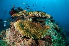 Olik korallrever och fjäderstjärna i Gili, Lombok, Nusa Tenggara Barat, Indonesien undervattens- foto royaltyfri fotografi