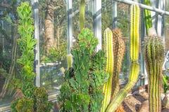 Olik lång kaktus i ett tropiskt växthus arkivbilder