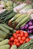 Olik ny grönsak Royaltyfri Bild