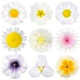 Olik samling av isolerade vita blommor Arkivfoton