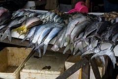 Olik sort av fisktonfisk på traditionell marknad i bogor indonesia Arkivfoto