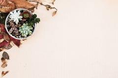 Olik sort av suckulenta växter i en caninställning på papp med torkade sidor Royaltyfria Foton