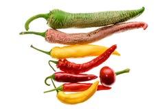 Olik variation av varma peppar eller chilies som isoleras på vit Royaltyfri Fotografi