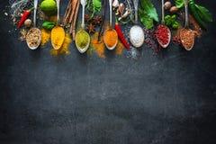 Olika örtar och kryddor royaltyfri bild