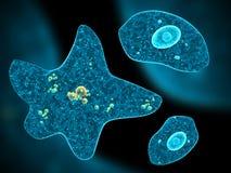 Olika amoebas på abstrakt bakgrund Arkivfoton