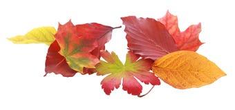 Olika Autumn Leaves på vit bakgrund Arkivfoto