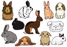 Olika avel av kaniner vektor illustrationer