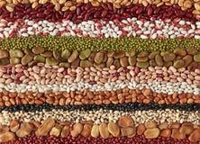 olika bönor Arkivbild
