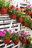 Olika blommor i blommamarknad Arkivfoto