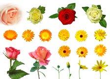 olika blommor isolerade seten Fotografering för Bildbyråer
