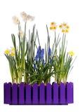 olika blommor många spring Arkivbild