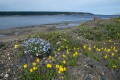 Olika blommor på bankerna av en stor flod Arkivbilder