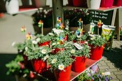 Olika blommor som är till salu på marknaden Royaltyfri Bild