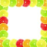 Olika citrusa skivor för mång- färg som rambakgrund Arkivfoto