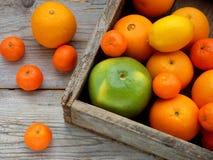 Olika citrusfrukter i en träask: tangerin apelsiner, raring, citron ovanför sikt Royaltyfri Foto