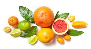 Olika citrusfrukter på vit bakgrund Royaltyfria Foton