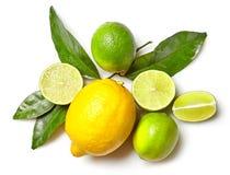 Olika citrusfrukter på vit bakgrund Fotografering för Bildbyråer
