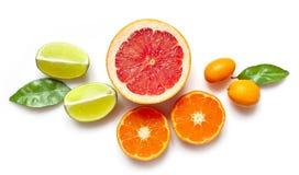 Olika citrusfrukter på vit bakgrund Royaltyfria Bilder