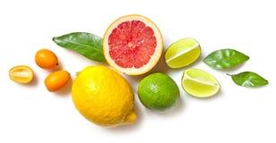 Olika citrusfrukter på vit bakgrund Arkivbild