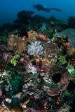 Olika Coral Reef och dykare i den Komodo nationalparken arkivfoto