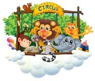 Olika djur på cirkusen Royaltyfri Foto