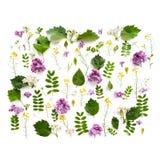 Olika fältväxter och lilablommor fodrade med en rektangel på royaltyfri fotografi