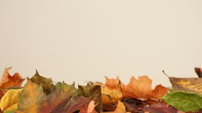 Olika färgade Autumn Leaves mot en ljus bakgrund arkivfoto