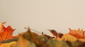 Olika färgade Autumn Leaves mot en ljus bakgrund arkivfoton