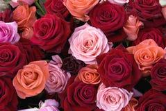 Olika färger av rosor Royaltyfri Bild