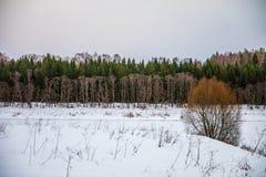 Olika färger av vinterskogen i Ryssland arkivbild