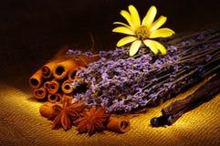 olika färgrika kryddor Royaltyfria Bilder