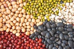olika färgrika torkade legumes för bönor Royaltyfri Bild