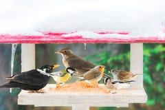 Olika fåglar äter i en krubba Arkivfoto