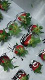 Olika fester avgör att spara för Valentine& x27; s-dag Royaltyfria Bilder