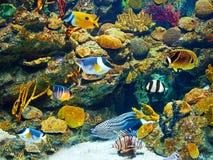 olika fiskar under vatten Arkivbilder